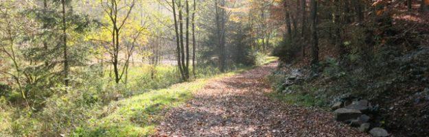Herbstlicher Waldweg bei Radevormwald